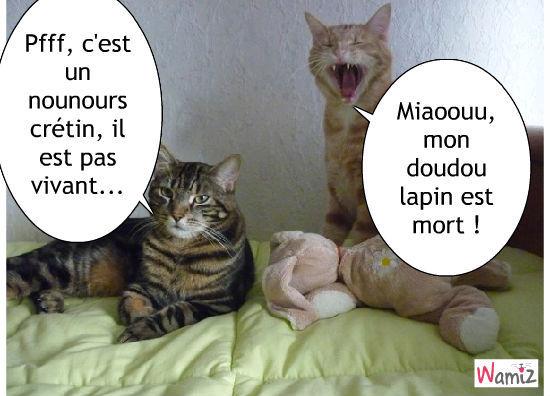 chats désespérés, lolcats réalisé sur Wamiz