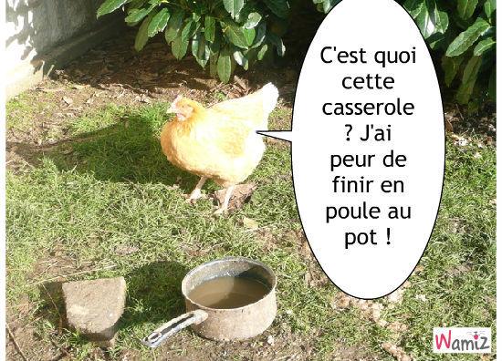 La poule au pot, lolcats réalisé sur Wamiz