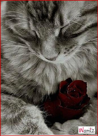 Le chat est un animal exceptionnel...., lolcats réalisé sur Wamiz