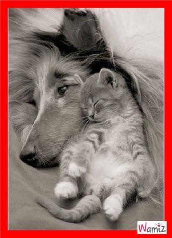 Nos amis les animaux nous aiment sans nous juger, sans condition.... A nous de ne pas les trahir ..., lolcats réalisé sur Wamiz