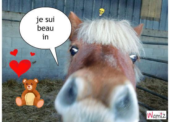 le cheval qui se truve beau, lolcats réalisé sur Wamiz