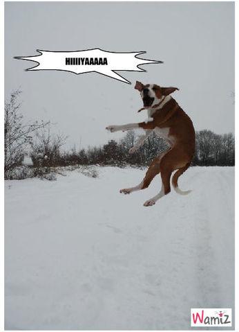 Karaté Dog, lolcats réalisé sur Wamiz