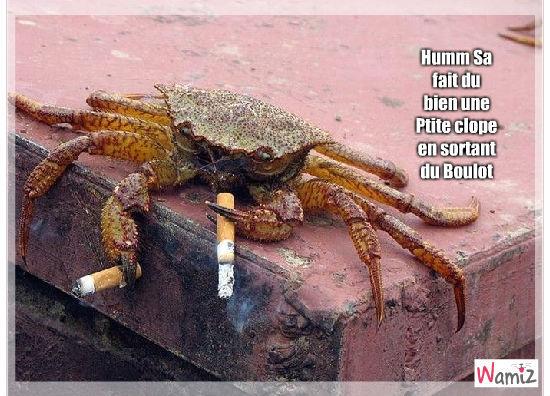 Crabe qui Fume, lolcats réalisé sur Wamiz