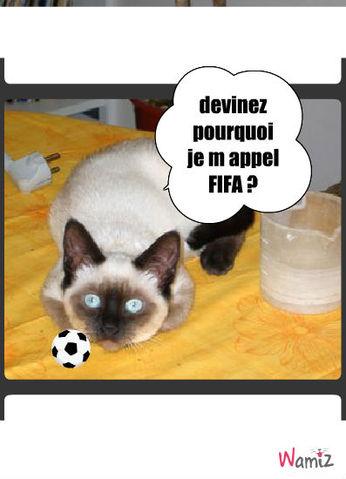 FIFA , lolcats réalisé sur Wamiz