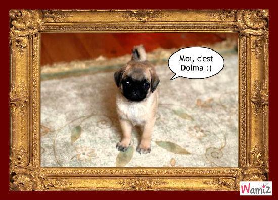 Dolma, lolcats réalisé sur Wamiz