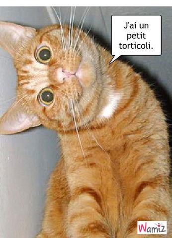 Torticoli, lolcats réalisé sur Wamiz