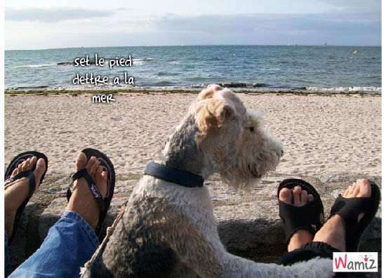 a la mer, lolcats réalisé sur Wamiz