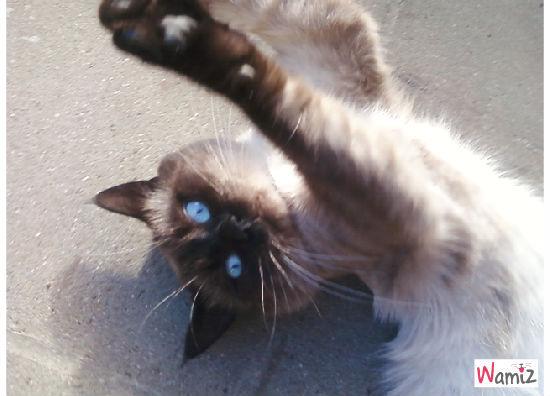 mon chat musti, lolcats réalisé sur Wamiz