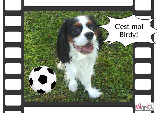 Birdy..., lolcats réalisé sur Wamiz
