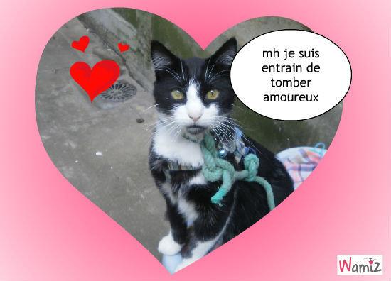 mon chat est amoureu, lolcats réalisé sur Wamiz