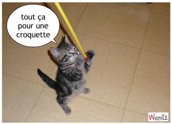 c'est la vie de chat, lolcats réalisé sur Wamiz