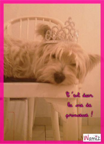 Princesse Chipie, lolcats réalisé sur Wamiz