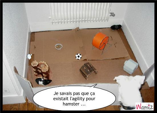 EXCLUSIF : L'AGILITY HAMSTER !!!, lolcats réalisé sur Wamiz