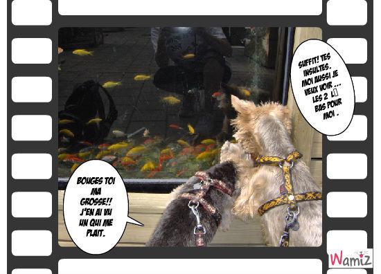 Ambre et brume chez l'animalerie!!, lolcats réalisé sur Wamiz