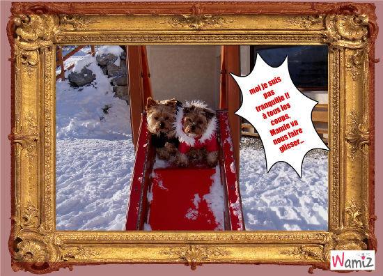Ambre et Brume à la neige, lolcats réalisé sur Wamiz