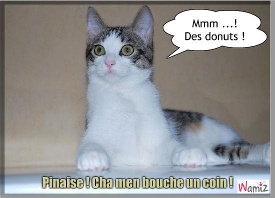 Pinaise!, lolcats réalisé sur Wamiz
