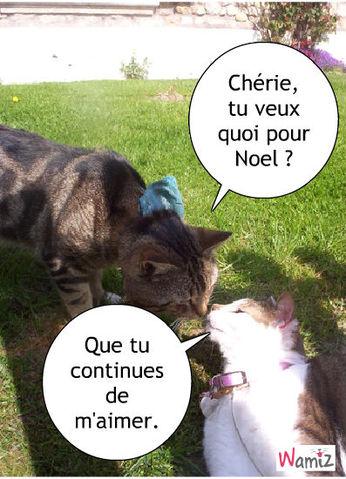 Amour de chats, lolcats réalisé sur Wamiz