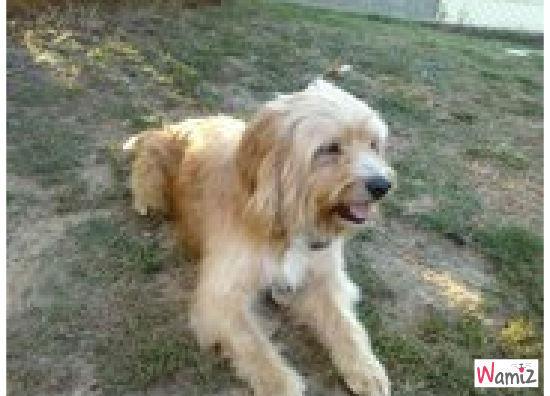 OSCAR chien adopté, lolcats réalisé sur Wamiz