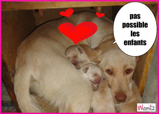 les bebes labradors, lolcats réalisé sur Wamiz