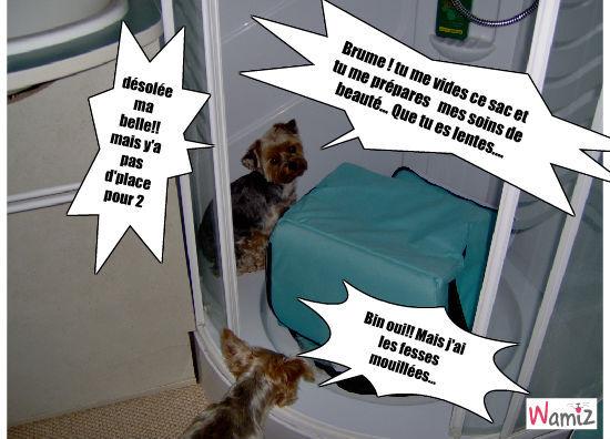 la toilette de Madame!!!, lolcats réalisé sur Wamiz