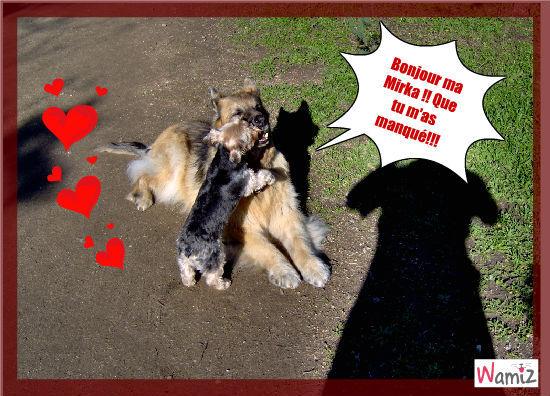 ha! la tendresse des animaux...., lolcats réalisé sur Wamiz