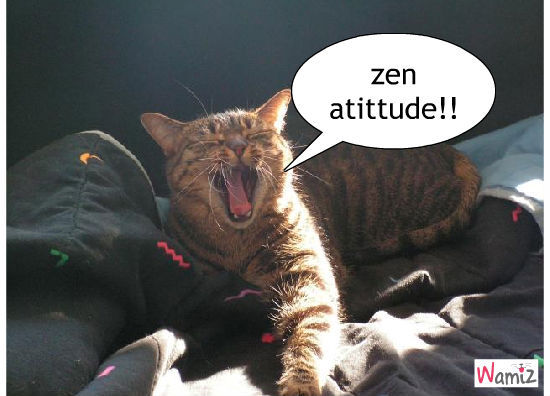 zen le chat!!!!!, lolcats réalisé sur Wamiz