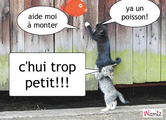 chat qui essaient de prendre un poisso, lolcats réalisé sur Wamiz