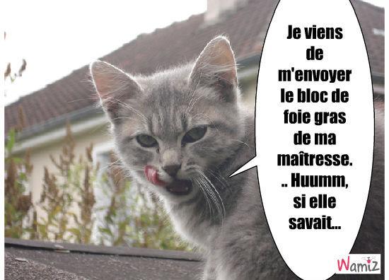chat gourmand, lolcats réalisé sur Wamiz