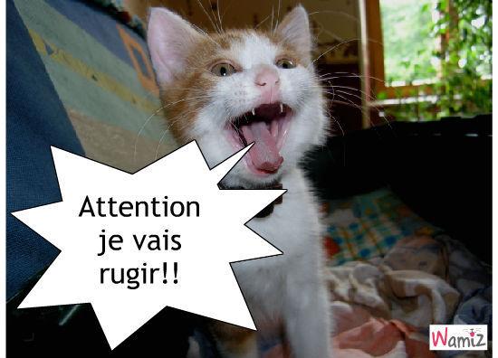 chaton dangeureux, lolcats réalisé sur Wamiz