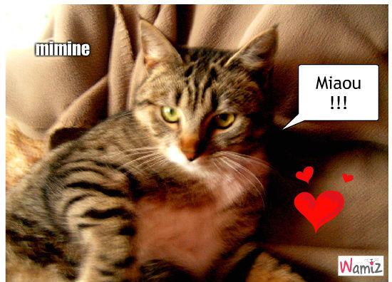Mimine, lolcats réalisé sur Wamiz