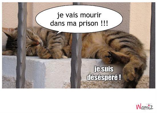 la prison, lolcats réalisé sur Wamiz