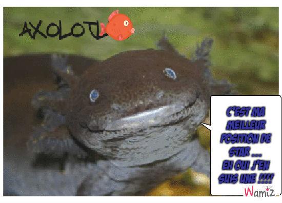 axolotl, lolcats réalisé sur Wamiz