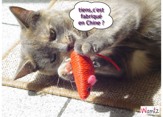 made in china, lolcats réalisé sur Wamiz