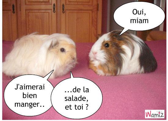 Vanille et Speedy, fan de salade, lolcats réalisé sur Wamiz