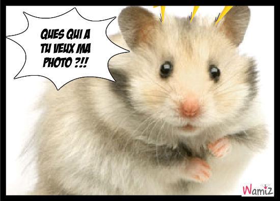 hamster en colère, lolcats réalisé sur Wamiz