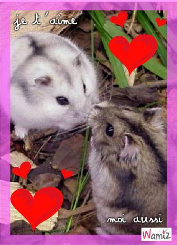 hamsters amoureux, lolcats réalisé sur Wamiz