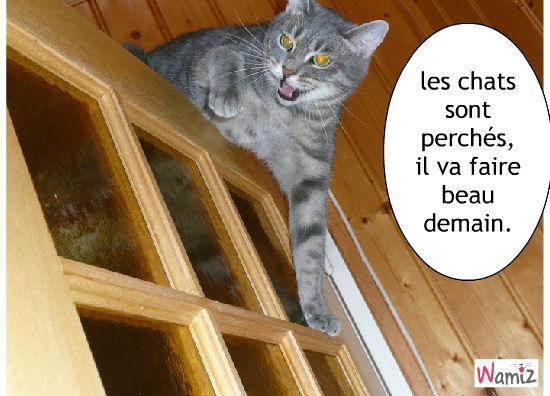 les chats perchés, lolcats réalisé sur Wamiz