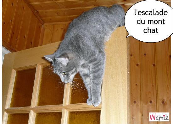 le chat alpiniste, lolcats réalisé sur Wamiz
