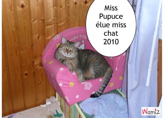 Miss chat 2010, lolcats réalisé sur Wamiz