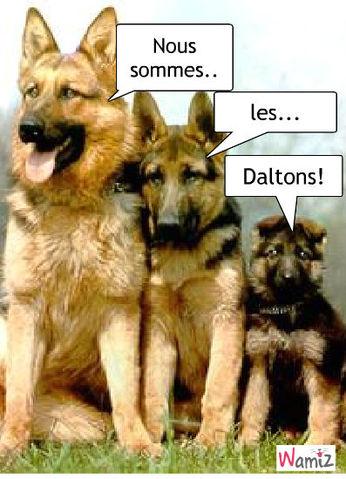 Les bergers-Daltons, lolcats réalisé sur Wamiz