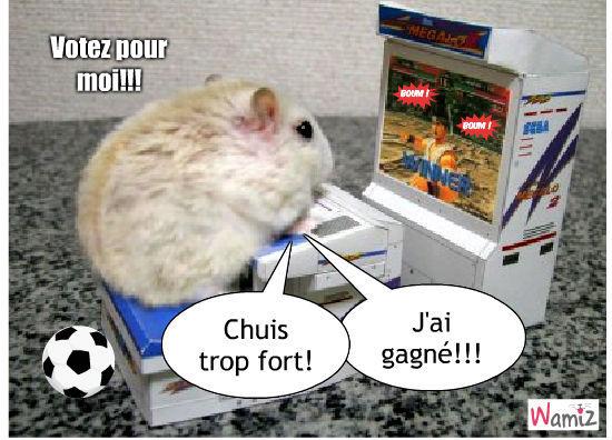 Hamster Gagnant , lolcats réalisé sur Wamiz