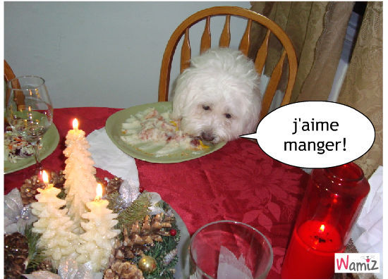 je  mange  a  la  tabeje  mange  a  la  table  comme  vous, lolcats réalisé sur Wamiz