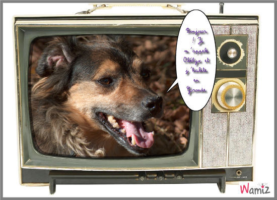 Obélyx à la télé, lolcats réalisé sur Wamiz