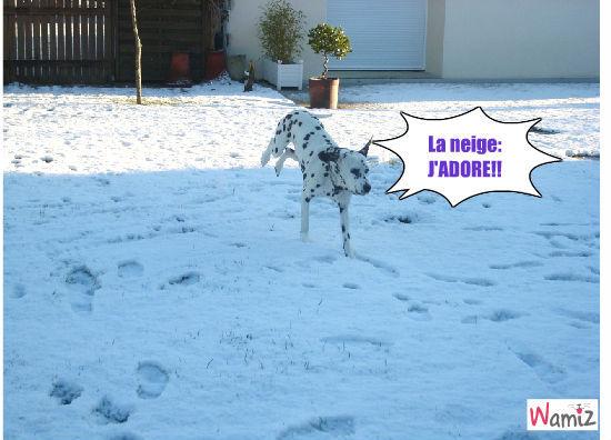 Tixy dans la neige , lolcats réalisé sur Wamiz