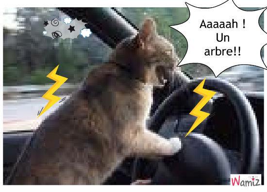 chat conducteur, lolcats réalisé sur Wamiz