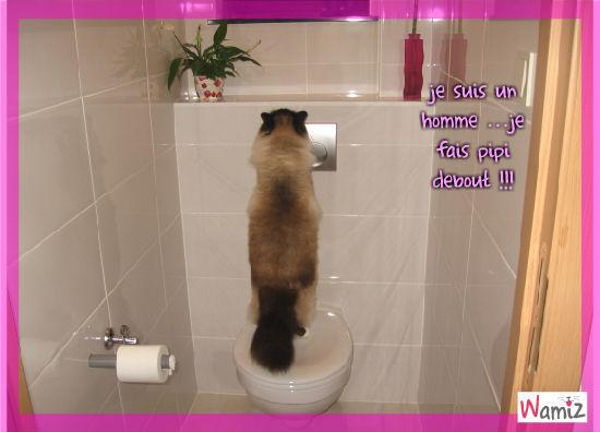 juju au toilette, lolcats réalisé sur Wamiz