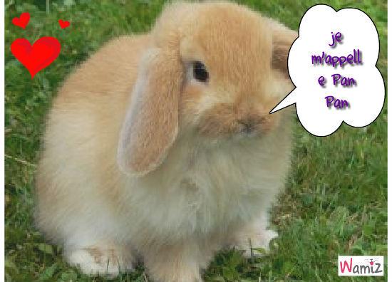 mon lapin, lolcats réalisé sur Wamiz