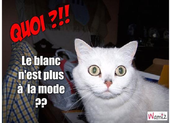 Fashion cat victim, lolcats réalisé sur Wamiz