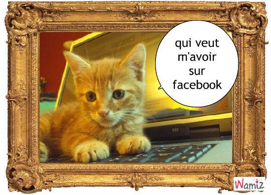 face book, lolcats réalisé sur Wamiz
