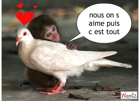 amour !!!!!!!!!!!!!!, lolcats réalisé sur Wamiz